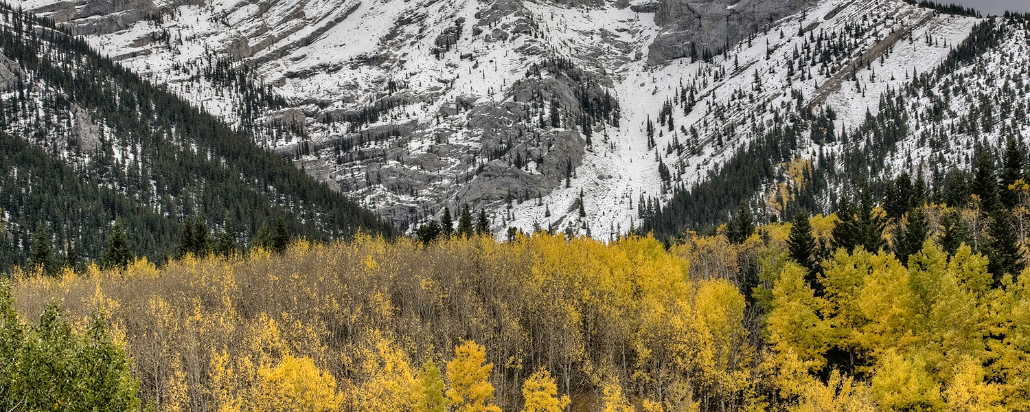 Colourbox stock photo of Kananaskis in the fall shows yellow trees in front of mountains