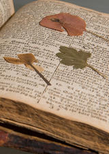 Pressed flower in book